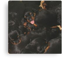 Litter Of Rottweilers and One Puppy Being Different Canvas Print