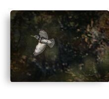 Kingfisher in Holly Hill Canvas Print