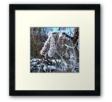 Frozen Catkins Framed Print