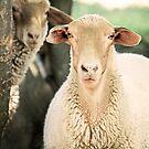 """""""What Are Ewe Staring At ?"""" by Renee Blake"""