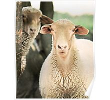 """""""What Are Ewe Staring At ?"""" Poster"""