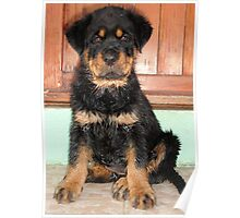 A Discontented and Wet Rottweiler Puppy  Poster
