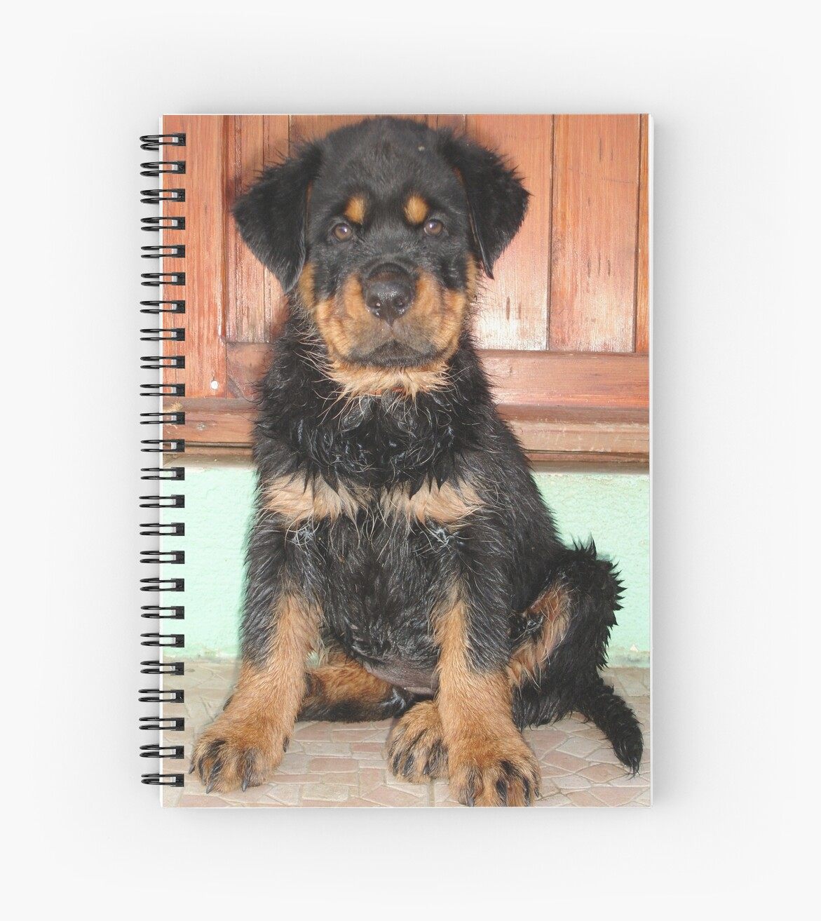 A Discontented and Wet Rottweiler Puppy  by taiche