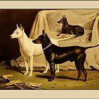 Vintage English Terrier Greetings by Yesteryears