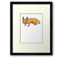 orange sphynx Framed Print