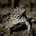 Horned Frog by Jared Lindsay