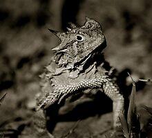 Horned Frog by Jared Lindsay
