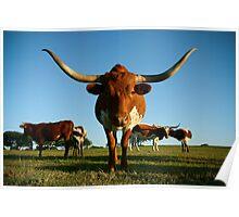 Long Horn Poster