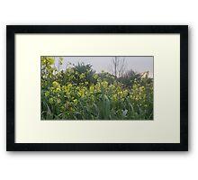 Fields of Wild Flowers - Stonebroom Framed Print