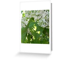 Lovely Lilacs Greeting Card