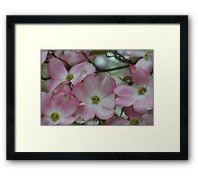 Pretty Pink Dogwood Flowers Framed Print