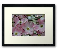 Pretty Pink Dogwood Flowers Framed Print