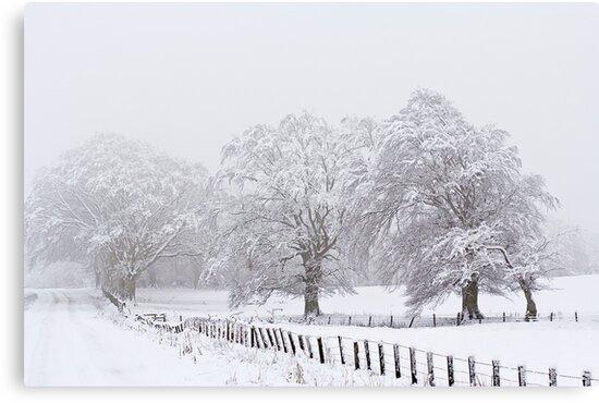 A White Out by Lynne Morris