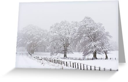 A White Out by Lynne Morris