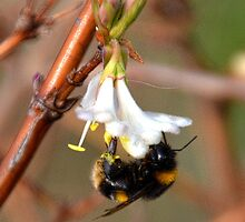 Lean Pickings For A Bee by lynn carter