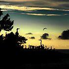 bird silhouette  by thehylian