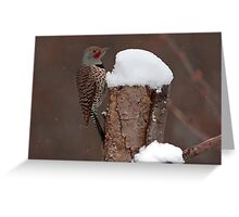 Flicker in the Snow Greeting Card
