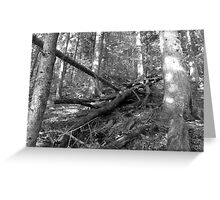 WildForest Greeting Card