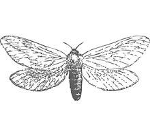 Vintage Moth Photographic Print