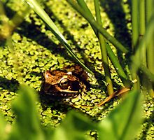 Frog-King by PierPhotography