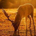 The Morning Deer by samcmoore
