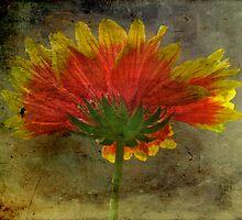 Blanket Flower Wildflower by MotherNature