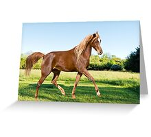 Horse dance in the meadow Greeting Card