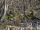 Wetland Winter Wonderland by MotherNature