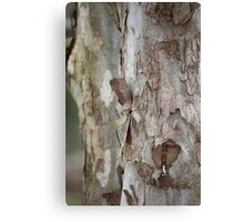 Sycamore Flakes Canvas Print