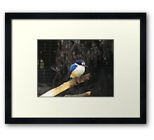 concentrated life Framed Print