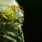 My leaf. Got it? by Helena Bolle