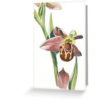 Bee Orchid Greeting Card