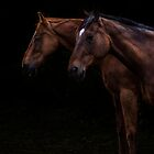 Two Horses by Richard Downes