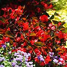 Flower rainbow by freshairbaloon