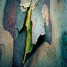 Bark Abstract # 9  by Frederick James Norman
