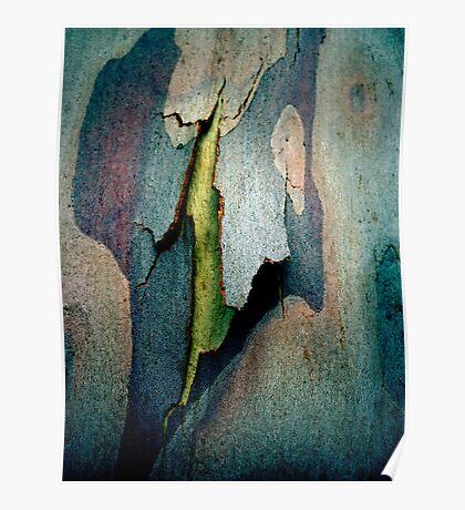 Bark Abstract # 9  Poster