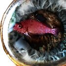 Fish-eye lens by Grildrig