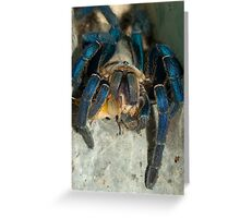 Cobalt blue tarantula feeding on cricket Greeting Card