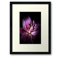 Lily of the Night Framed Print