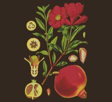 pomegranate by Alex Magnus