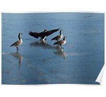Precarious Walk on the Ice - Canada Geese, Lake Ontario, Toronto Poster