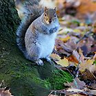 Autumn Squirrel by Sally Green