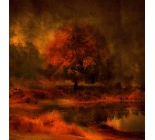 Reflections Under a Copper Sky Photographic Print
