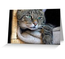 Tabby Reclining Greeting Card