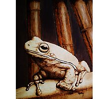 mr. frog Photographic Print