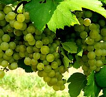 Green Grapes  ^ by ctheworld