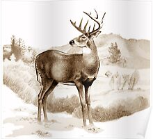 White-tailed Stag Sniffing the Air Poster