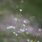 White Flowers by Ryan Leatzaw