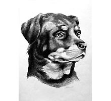 Rottweiler Devotion Photographic Print