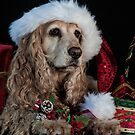A Spaniel Christmas by annibels